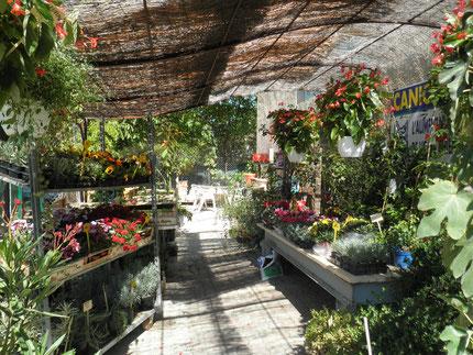 """la partie """"plants"""" de la jardinerie"""