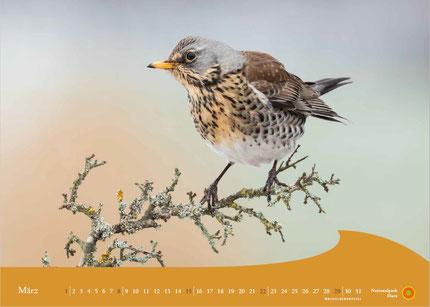 Kalender HarzNATUR 2020 / März