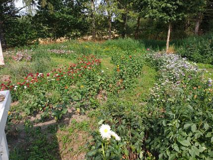 Das Blumenfeld
