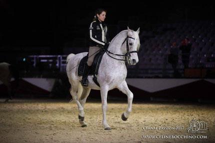 cheval arabe dressage