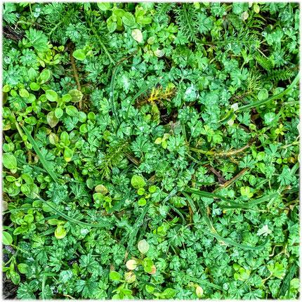 Hauptsächlich Grün