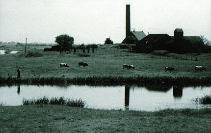 """Foto von 1955 der """"Herrschaftlichen Insel"""" oder auch """"Königsinsel"""", auf der Johann Ahlers 18977 eine Ziegelei errichten ließ"""