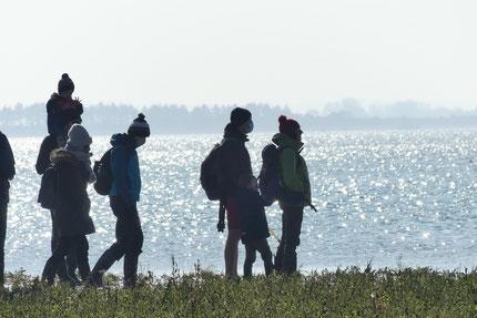sorties nature en baie de Somme: les phoques de la baie de Somme, la traversée