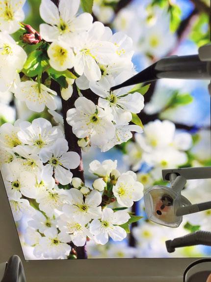 Ein beleuchtetes frescovision LED-Deckenbild in der Zahnarztpraxis. Ein Motiv mit Frühjahresblüten und Himmel.