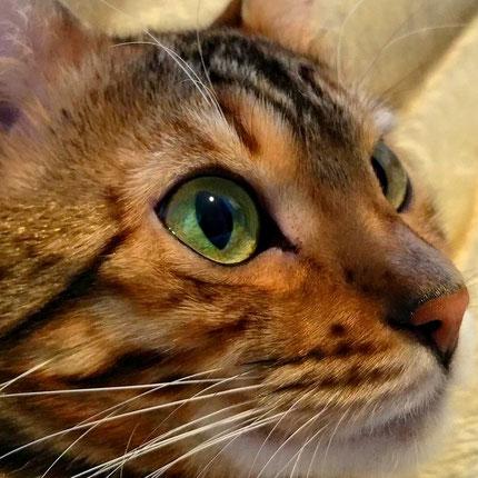 Dezember 2016. Esiahs schöne grüne Augen.