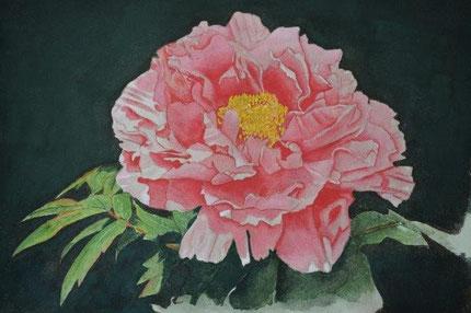 ピンクの牡丹描く