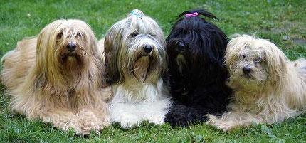 v.l.: Bya-ra (8), Milka (4), Kar-mi (6) und Indra (17 Jahre)