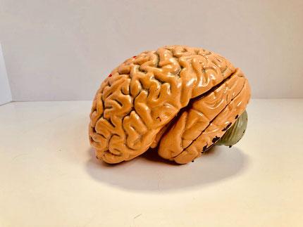 Hypnose zur Raucherentwöhnung : Hypnose aktiviert Hirnbereiche, die für Lernen und Verarbeiten wichtig sind