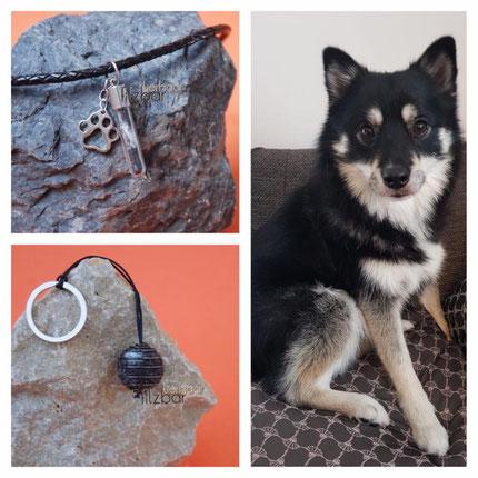 Pomsky ; Geschenk Hundebesitzer