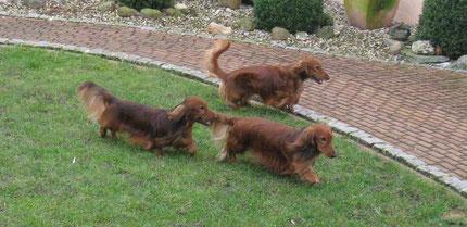 Benni, Balu und Alf