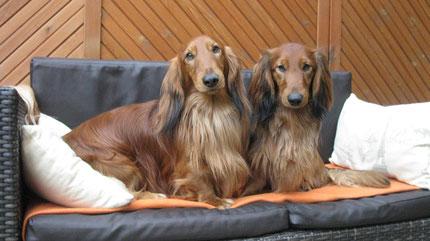 Alf und Benni