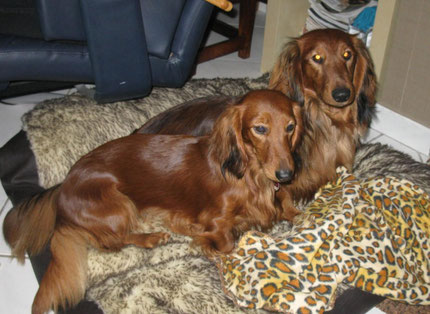 Bella und Benni