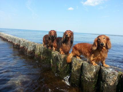 Urlaub an der Ostsee 2015, mit den drei Seehunden.