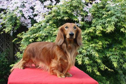 Felini im Alter von 5 Jahren