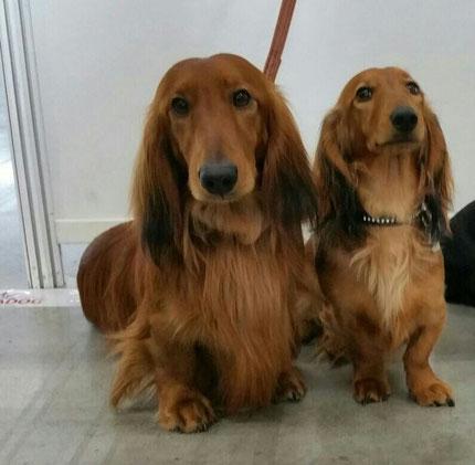 Chippy mit Schwester Coco