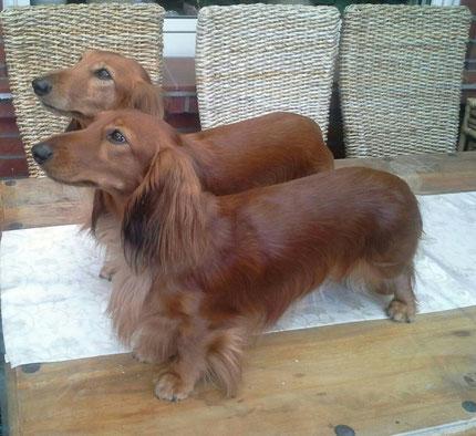 Fenja und Bella