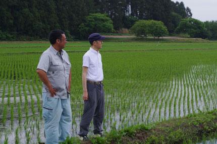 ひとめぼれを作る田にて 米農家の及川さん  と 有機肥料を取扱う阿部さん