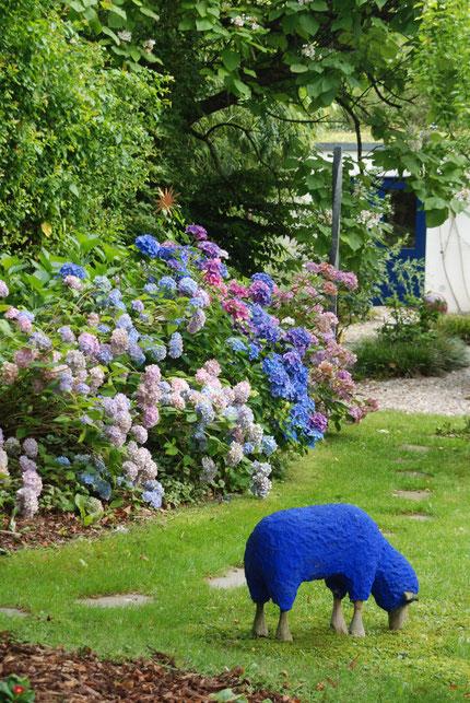 Blaue Hortensien mit blauem Schaf