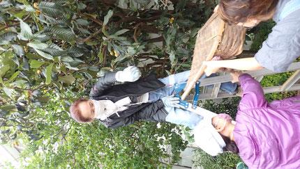 自然農の果樹の収穫体験・街で自然農@世田谷ものづくり学校