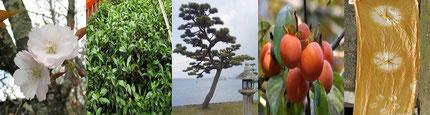日吉大社自然観察倶楽部:バナー