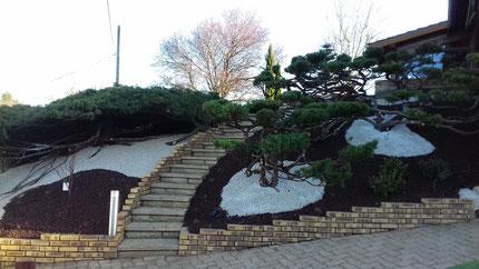 Taille Niwaki sur arbustes Juniperus à Saint-Etienne-sur-Chalaronne (01)