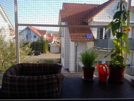 Bild: Ein Balkon für Pinta