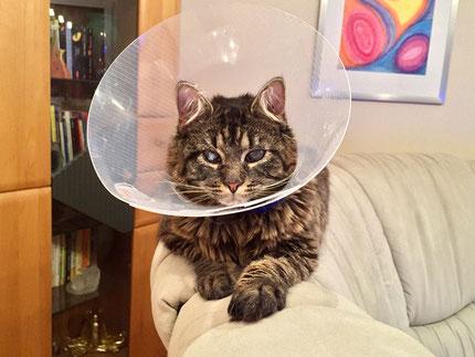 Bild: Katze Trinity mit Halskrause