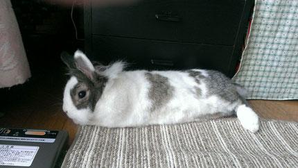 ウサギは伸びたら意外と長い!