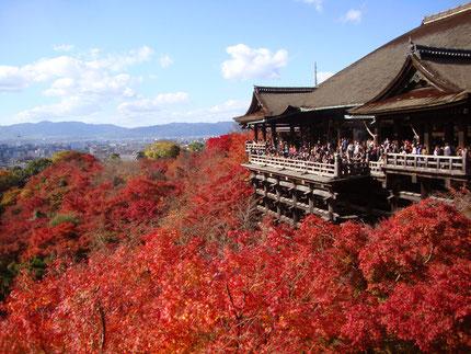 これで安心して京都観光できるかも・・・