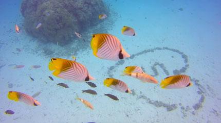 Aquarium in Bora Bora is the perfect spot for introductory dive