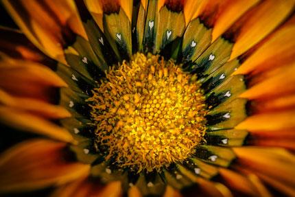 La galerie de Mateo, Mateo Brigande, fleurs, botanique, nature, végétaux, macro,
