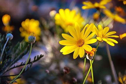 La galerie de Mateo, Mateo Brigande, fleurs, botanique, nature, végétaux, bouquet,