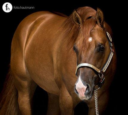 """Das wunderschöne Portraitfoto von """"foto.hautmann"""" ist die perfekte Vorlage für das Pferdegemälde"""