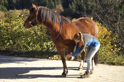 Therapie des Pferdes