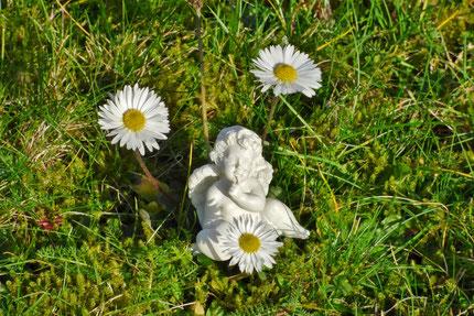 ein kleiner Blumenengel in unserem Vorgarten  (Foto © Renate Fachinger)