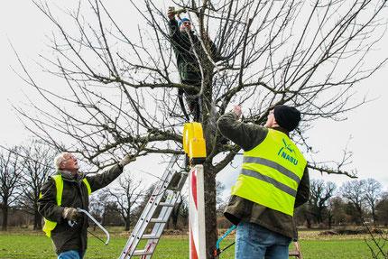 A.Skuppe/ Obstbaumpflegeeinsatz in Pennigbüttel