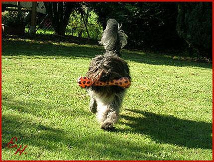 Der Schapendoes als Theraphiehund
