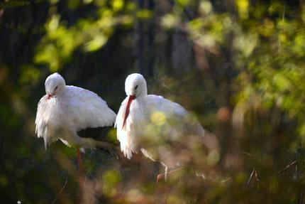 Birdwatching in Parco del Mincio