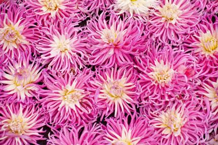 Flower Festival Copyright bluecrayola