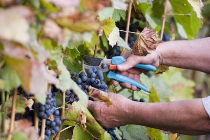 Wine - Parco del Mincio
