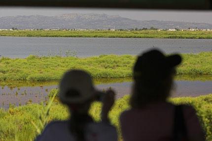 Birdwatching Elbro Delta