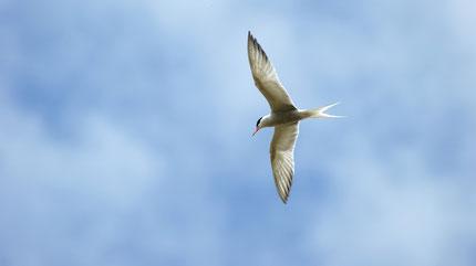 Birds in Moulins