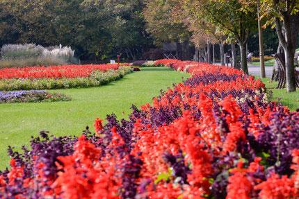 Botanical Garden Craiova