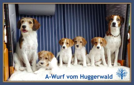 Askia vom Chirsgarten, Arbataxa, Ally, Asco, Amina vom Huggerwald,          Tante Debby von Burg Lobenstein