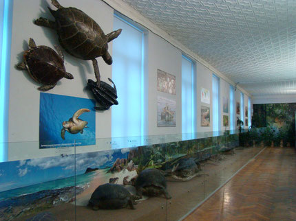 Zoological Museum in Kyiv