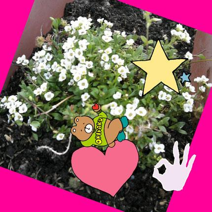 花壇の白い花を可愛くしました