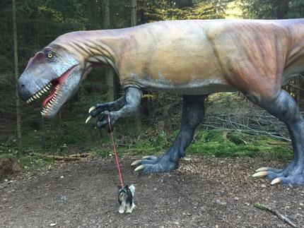 kleiner Biewer-Yorkshire trifft Dinosaurier