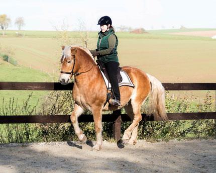 Piaffe mit einem Pferd das rein gebisslos ausgebildet wurde