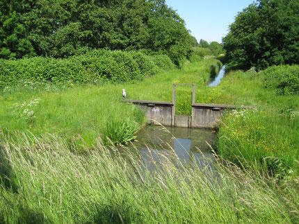 Entwässerungsgraben im Osten Wilhelmsburgs