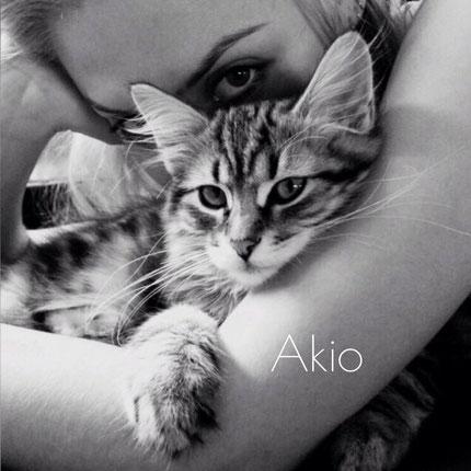 Sibirische Katze, Akio of TheRoseFamily
